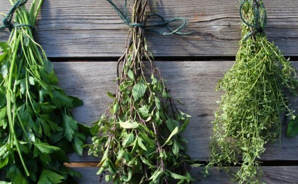 Как сохранить травы