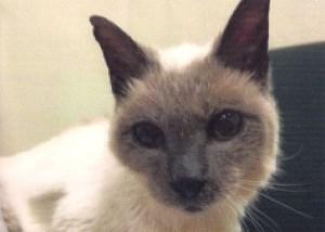 Скутер, самая старая кошка в мире, официально признана Книгой рекордов Гиннеса