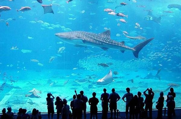 Океанический аквариум